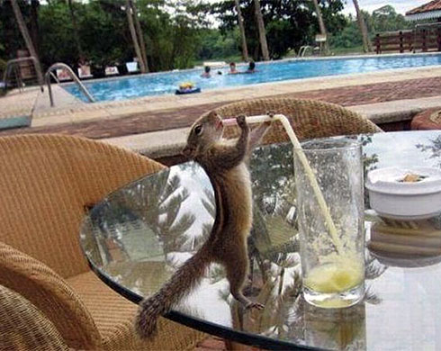 Cocktail squirrel