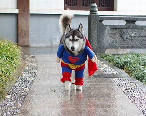 The REAL Superdog!